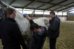 equitation (2)