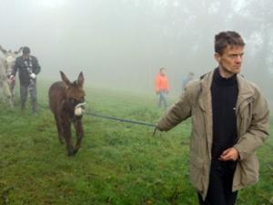Ferme des ânes